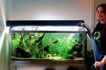 jasa pembuatan aquascape malang murah